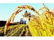 韓長賦:扎實推進農業結構調整 積極發展特色現代農業