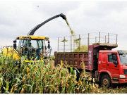 云南:青贮玉米成新兴致富产业