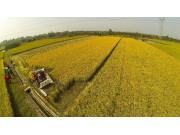 江苏将实施耕地保护补偿激励机制 省级每年投入1亿