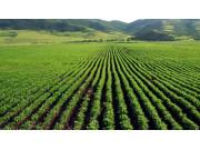 农业部:耕地流转面积超承包耕地总面积的1/3