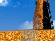 中國糧食總量需求2030年將達峰值
