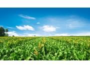 北方农牧交错带农业结构调整是农牧业可持续发展的必然选择