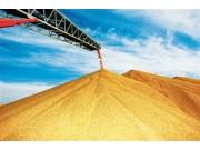 2016年全国粮食总产量达61623.9万吨 同比减少0.8%