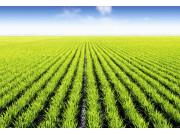 農業部發布《農業物聯網發展報告2016》