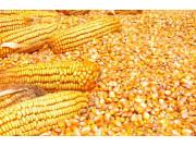 2016年的玉米市场盘点 你有没有错过什么?
