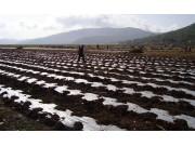 農膜污染影響大呼喚農機來幫忙