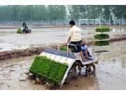 """农机销售""""冰火两重天"""" 农情决定市场"""