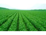 大豆目標價格改革試點成效初顯