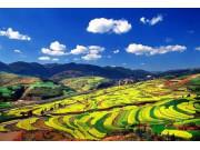 農業部:今年種植結構調整開局良好