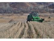 种植面积由减半到将增四成 国产大豆的春天来了