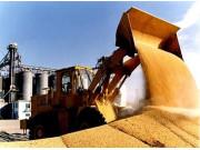糧價走低,糧農如何迎難而上