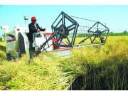 油菜生产机械化绿色攻关模式取得新突破