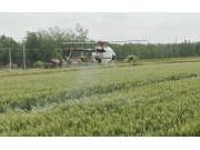 天鹰兄弟植保无人机为小麦丰收保驾护航