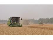 全国三夏麦收全面展开 绿色高效机收成亮点