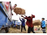 中聯穀王聯合收割機+小麥秸稈打捆機助力成安縣麥收