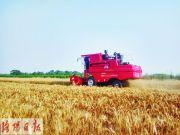 特殊麥客福格森免費為孟津平樂老百姓收小麥