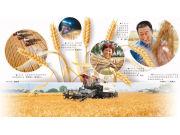 """麦子熟了,""""互联网+农机""""来了"""