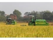 全面优化升级 中联重科国三水稻机受青睐