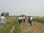 河北雷肯农业机械有限公司研发国产第一台高效青毛豆收获机