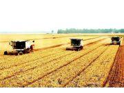 今年夏糧再獲豐收 產量歷史第二