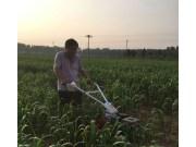 北京市農機鑒定推廣站開展谷子中耕機械化技術試驗