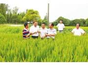 上海穴直播补水稻机械化短板
