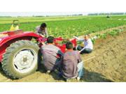 """吴洪珠:马铃薯机械的""""发明家"""" 身怀20多项发明专利"""