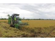 三伏天如何清凉一夏? 谷王机手的水稻收获新发现