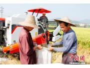 再生稻全程机械化为国家粮食安全再添保障