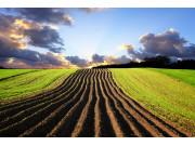 全國耕地面積繼續維持20.25億畝