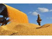 史上最高单项补贴 第一批玉米生产者补贴资金300亿元下发