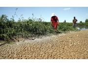 黑龙江受旱农田超3000万亩