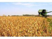 種植大戶潛力巨大,或成為農資電商發展的奇點