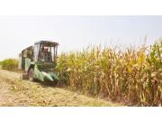 谷王玉米機 瀟灑收獲中原玉米