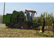 中原玉米收获忙 润源玉米收大显身手