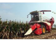 """玉米跨区机收""""一条龙""""作业成效高"""