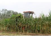今年收玉米,谁家的玉米收获机最受农民朋友喜欢和信赖?