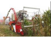 """厉害了,""""秸秆克星""""新型复式农机收玉米"""