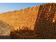 十月玉米价格将迎来上升期!(内附10.6全国玉米价格)