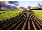 禁止以任何方式占用永久基本农田