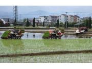 这几种带侧深施肥装置的插秧机在国际农机展备受追捧