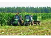 青贮玉米将进入快速发展期