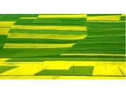 农业部发布农业农村信息化示范基地等成果