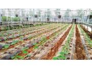 """农业部推进农膜回收行动: 治理""""白色污染""""要综合施策"""