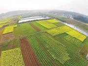15.5亿亩永久基本农田落地到户