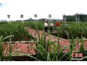 """中国加速蔗糖机械化发展 激活糖业""""二次创业"""""""