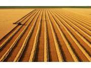 农机化是促进农民增收的重要手段