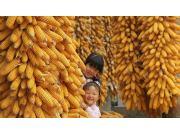 今年,糧食產量1.23萬億斤,農民收入有望突破1.3萬元