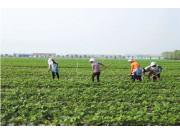 农行:今年支持培育10万家庭农场