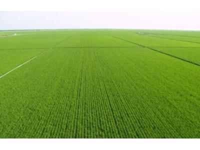 全国耕地轮作休耕制度试点规模增至1200万亩